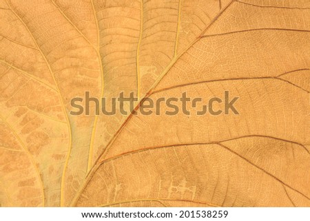 Dry leaves close up, background