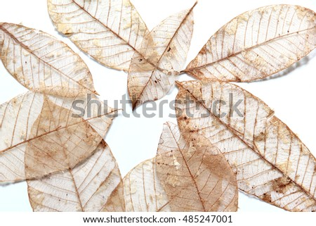 Dry leaves isolated on a white background.