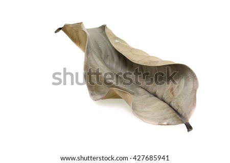 Dry leaves isolated on white background. - stock photo