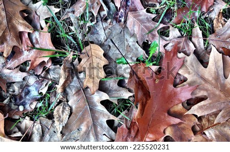 Dry leaves of various colors lay randomly in the grass. - stock photo