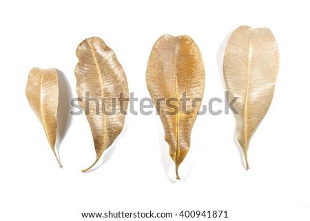 Dry leaves on a white background - stock photo