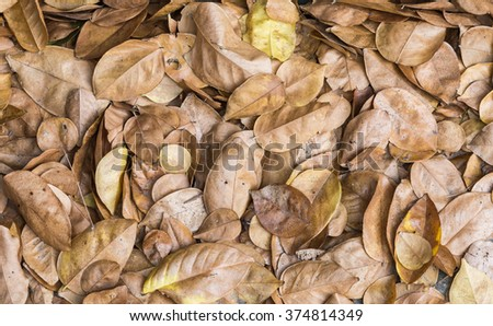 Dry leaves pile on the ground of park. - stock photo