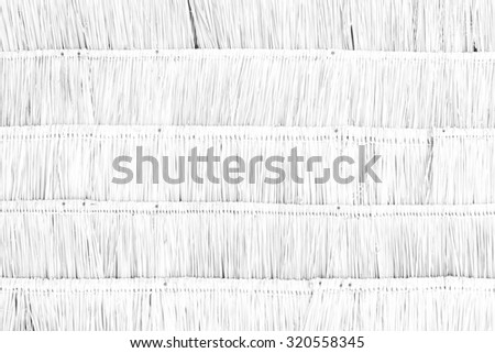 Dry leaves wall texture background white color