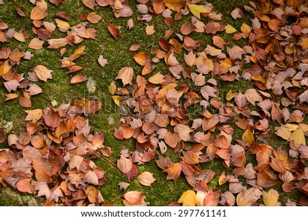 Dry maple leaf on ground, beautiful texture  - stock photo