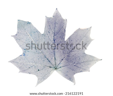Dry maple leaf on white background isolated - stock photo