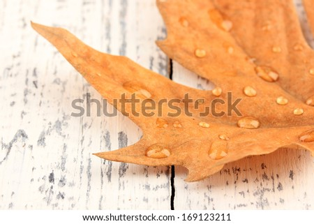 Dry maple leaf with drops, on wooden background - stock photo