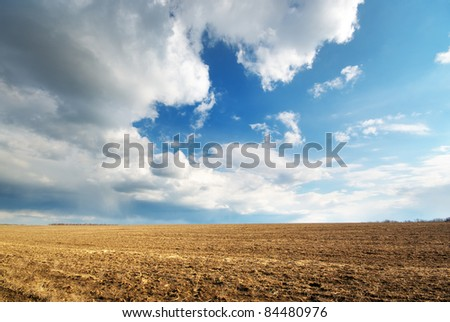 Dry meadow. Composition of nature. - stock photo