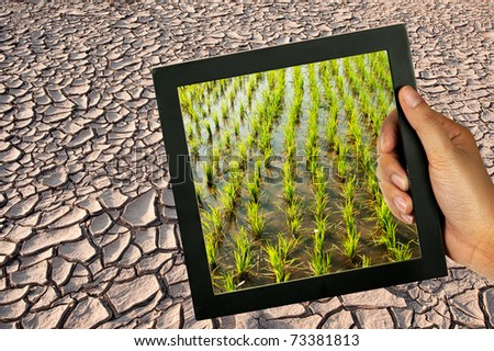Dry Mud Field after water in lake dry. - stock photo
