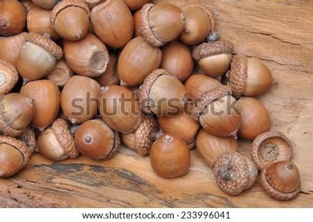 Dry oak acorns  on wooden board - stock photo