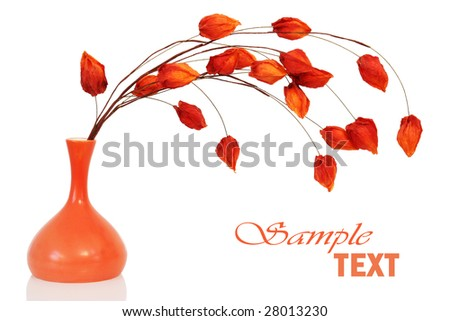 Dry orange bouquet in a vase isolated on white - stock photo