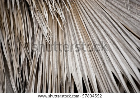 Dry palm fronds - stock photo