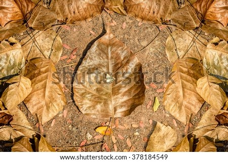 Dry pho leaf or bodhi leaf  on grond abstract