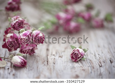 Dry pink tea roses on the old wood background - stock photo