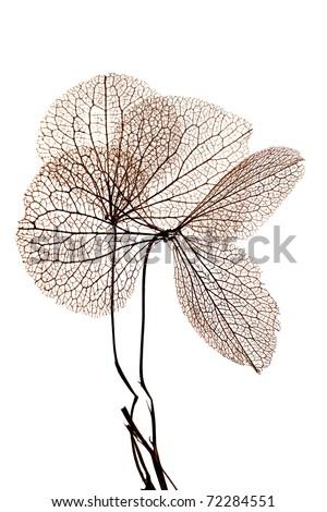 Dry plant - stock photo