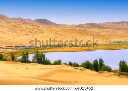 Dry plant in desert lake - stock photo