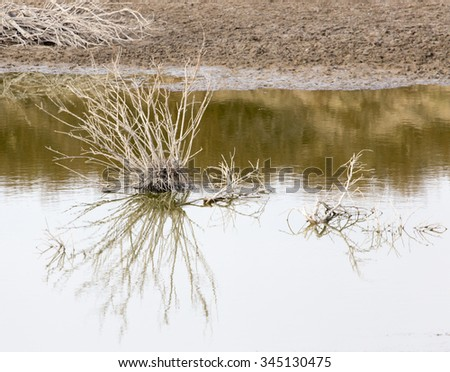 Dry plant in Lake with reflection