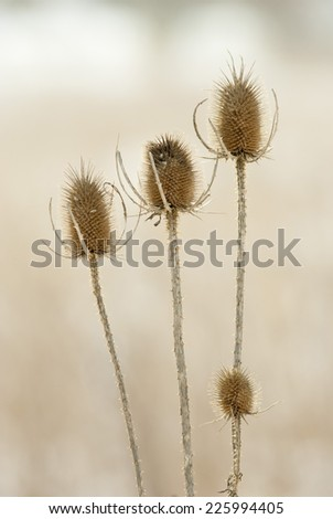 dry plants in snow, meadow at winter - stock photo