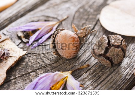 dry plants on wood, autumn background