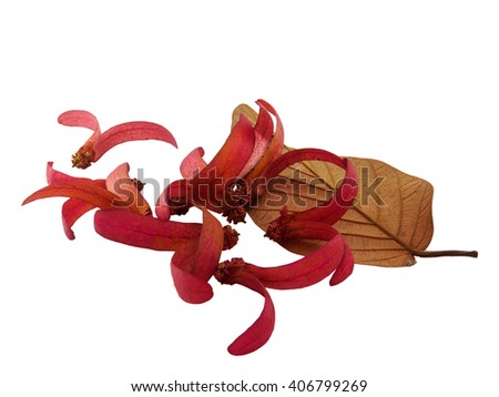 Dry red flower and leaf of isolated, on white background - stock photo