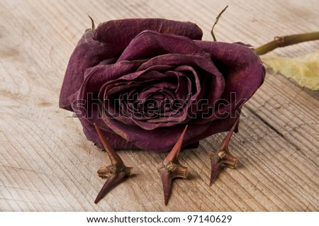 dry red rose and the thorn acacia tree on the old table - stock photo