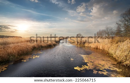 Dry reeds and leafless trees on the autumn river - stock photo