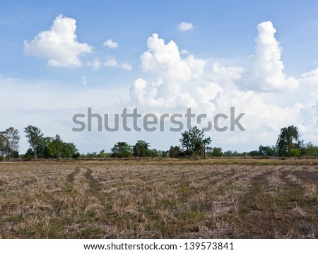 Dry rice field landscape