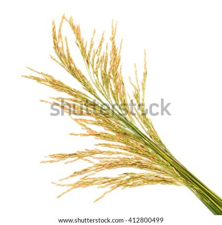 Dry rice on white background - stock photo