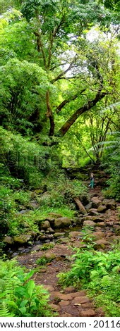 Dry river in rainforest - stock photo