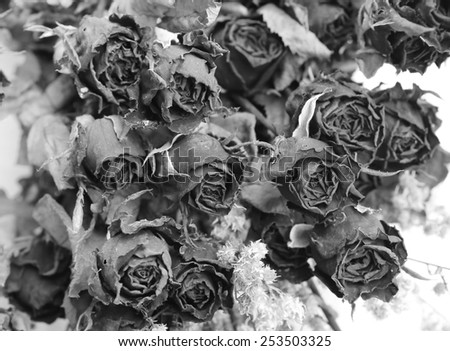 dry rose, black and white - stock photo