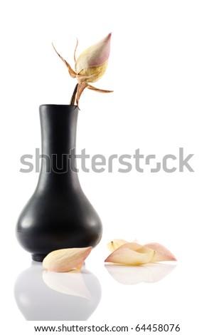 Dry rose in the black ceramic vase on white background - stock photo