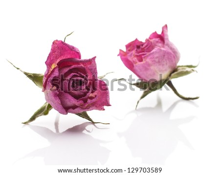 Dry rose pink flower. Isolated On white background. - stock photo