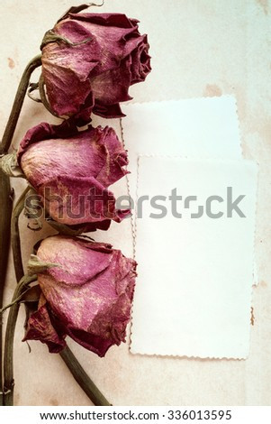 Dry roses and empty card for greetings.Vintage tone and grain. - stock photo