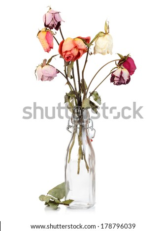 Dry roses in glass bottle isolated on white - stock photo
