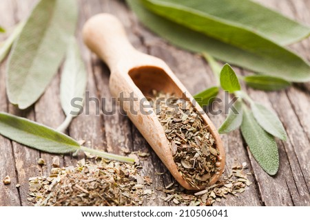 Dry sage in wooden scoop and green twigs - stock photo