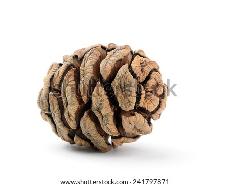 dry Sequoia cone with light shadow on white background - stock photo