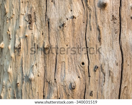 dry skin wood texture of aged hardwood background - stock photo