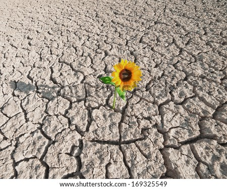 dry soil  of a barren land and single growing plant - stock photo