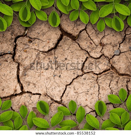 Dry soil with green creepers background