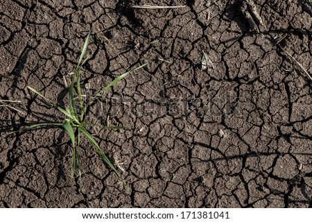 Dry soil with singe green wheat hope for new beginning - stock photo