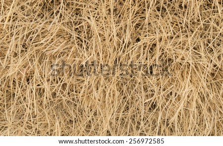 Dry straw and hay beautiful background - stock photo