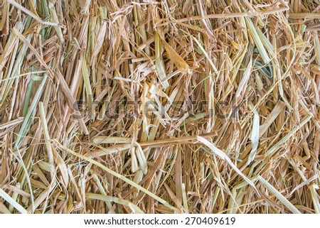 Dry straw. Background or Texture - stock photo