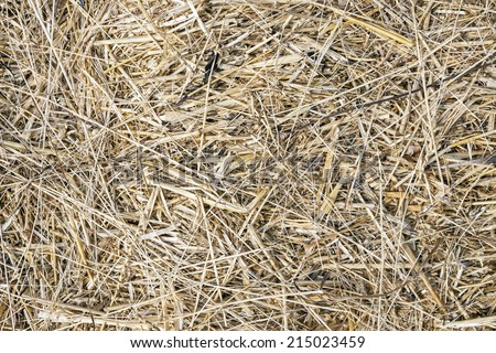 Dry straw for background. - stock photo