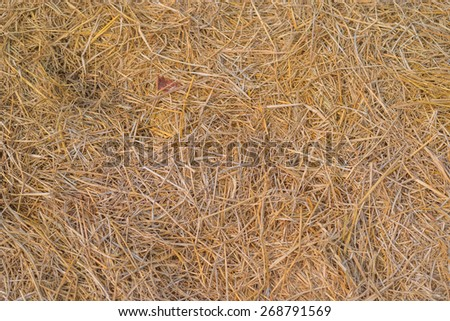 Dry straw macro shot. Background or Texture - stock photo