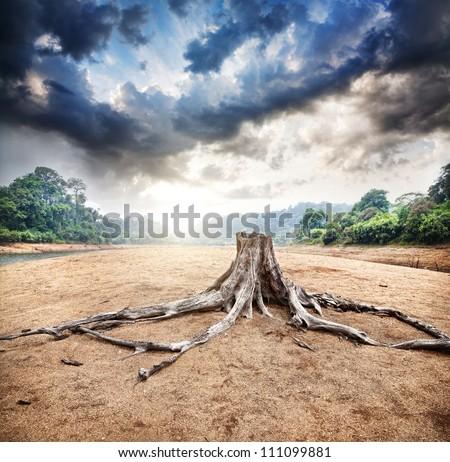 Deforestation impacts monsoon rains, says IISc study
