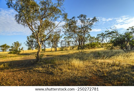 dry summer field outback