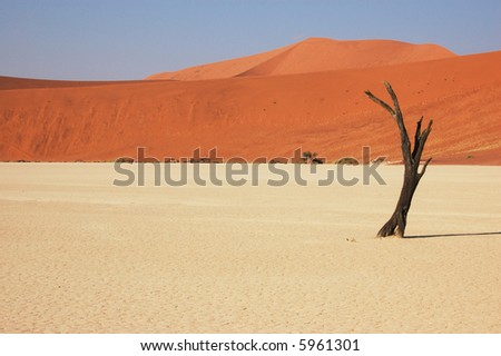 Dry terrain, dead tree and red dune - Lack of water. Namibia, Deadvlei, Sossuvlei. - stock photo