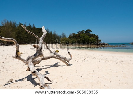 dry timber on beach with the white sand.