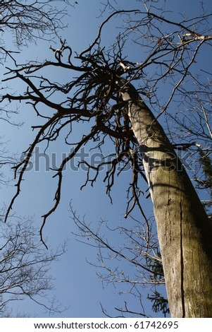 Dry tree - stock photo