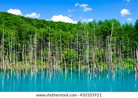 Dry tree and forest at Blue Pond, famous attraction in Biei, Hokkaido, Japan