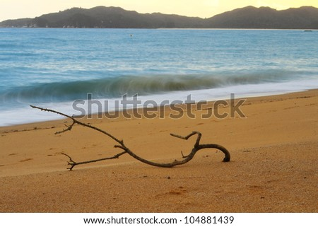 Dry tree branch laying on the sandy beach of Abel Tasman National Park, South Island, New Zealand. Focus intentionally on the branch. - stock photo
